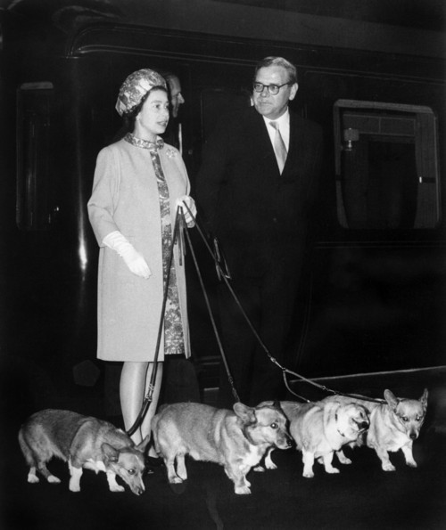 Today is The Queen's Diamond Jubilee, marking 60 years of her Corgi-filled reign as the Queen of England. Elizabeth has ruled with unshakable British resolve, riding horses through assassination attempts and steering the world through troubled times. Congratulations to E and her mutts!