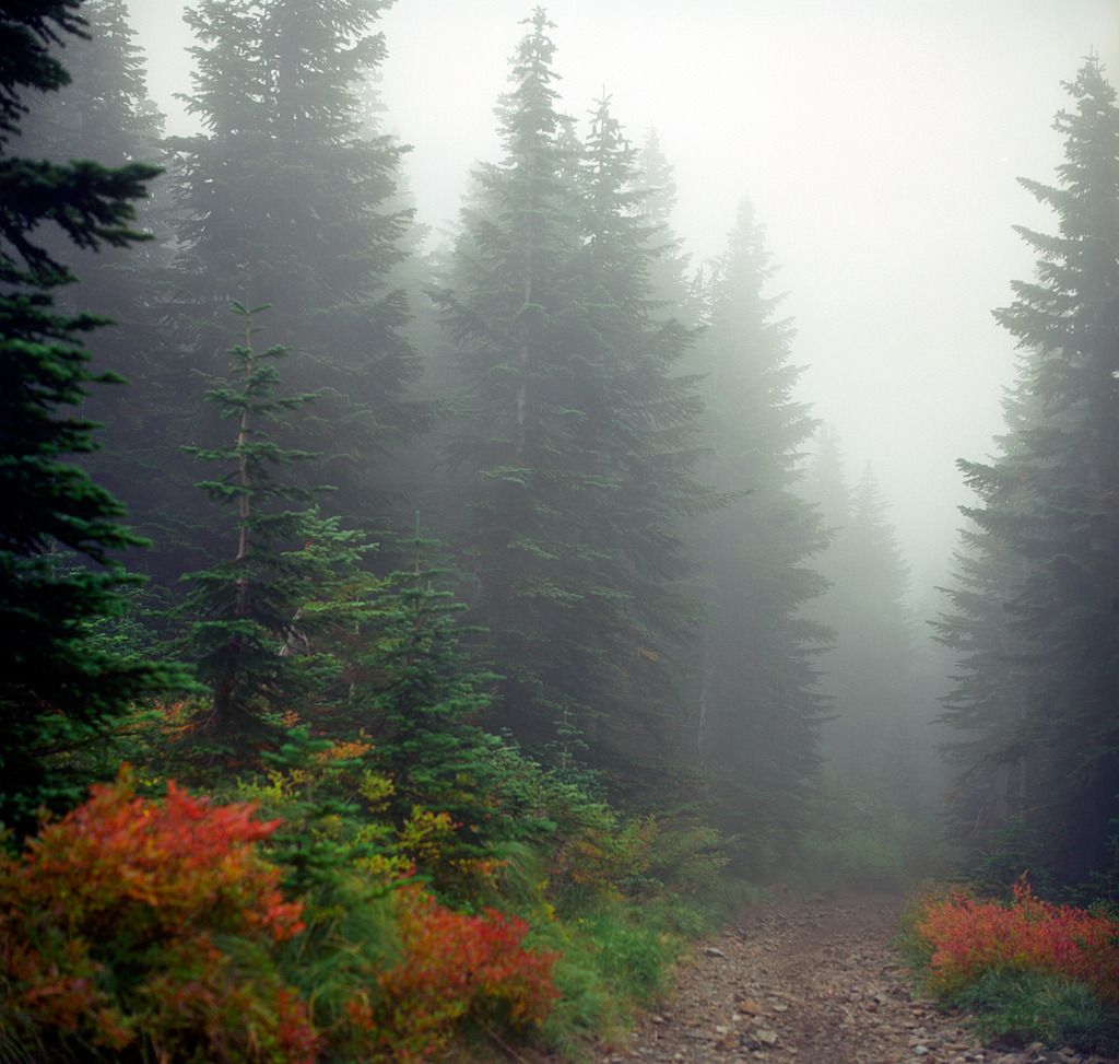 woodendreams:   (by Zeb Andrews)
