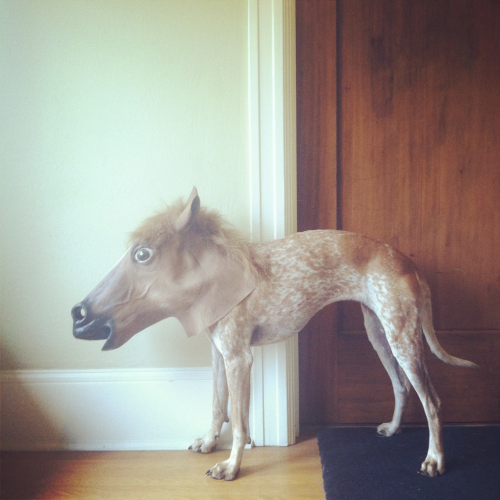laughingsquid:  Maddie the Coonhound Wearing a Horse Mask  Dat sit