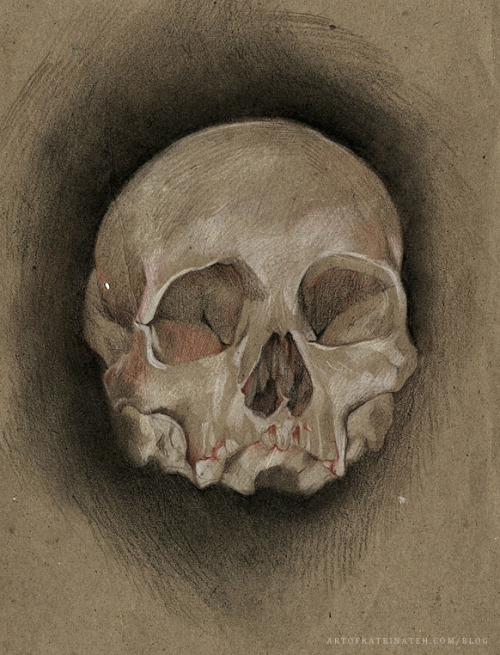 Skull Studyby Katrina Teh I am back from the dead. Will be updating with more work soon.