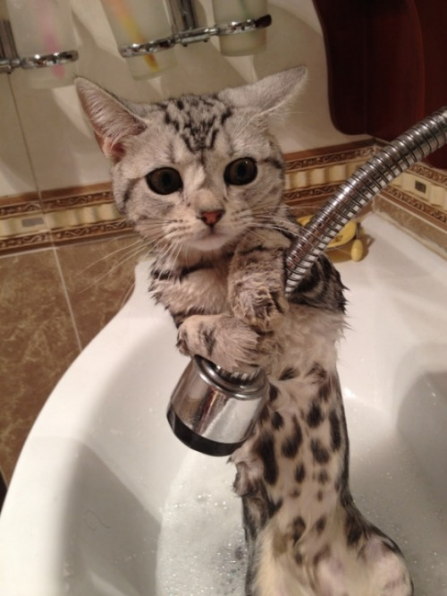 Please,no Bath!! via:cutestpaw