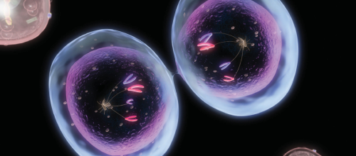 An enlarged photo showing mitosis, the most common form of cell division.
