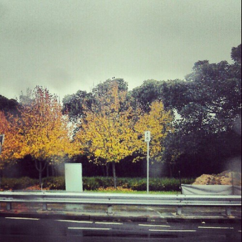 Is it really winter? These trees tell me it's almost fall. #winter #fall (Taken with instagram)