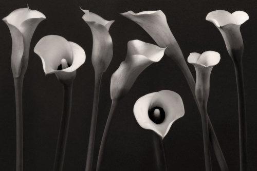 Composition With Callalily by Floriandra