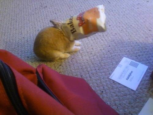 stuffonmyrabbit:  Chips bag