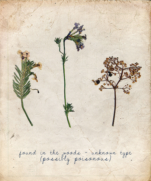Everdeen's Book of Plants  * Unknown