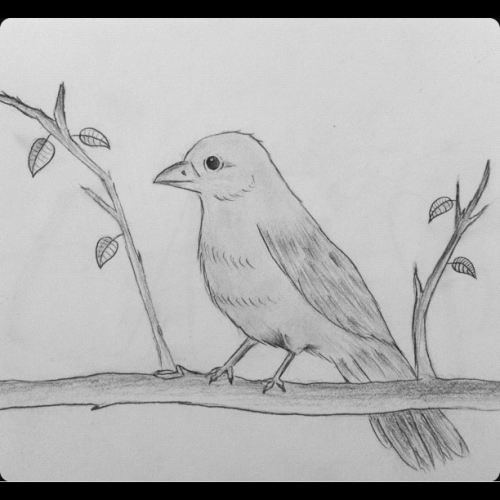 My pretty bird drawing ^_^