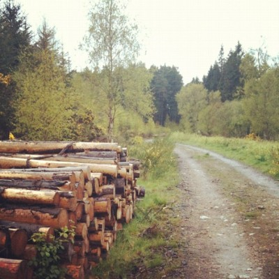 Forest Walk #logs #wood #bark #mud #walk #grass #trees #sky #nature #wildlife #forest #woods #scenic #landscape #path  (Taken with instagram)