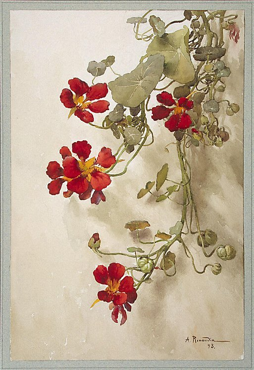 23silence:  A. Renaudin - Nasturtiums, 1893  Lovely.  I had nasturtiums when we lived in Brampton, and the neighborhood kids had great fun eating them :)  I'd like to plant them again but haven't  found the seeds.