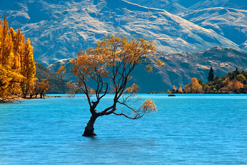 bluepueblo:  Solitude,  Lake Wanaka, New Zealand photo via describing