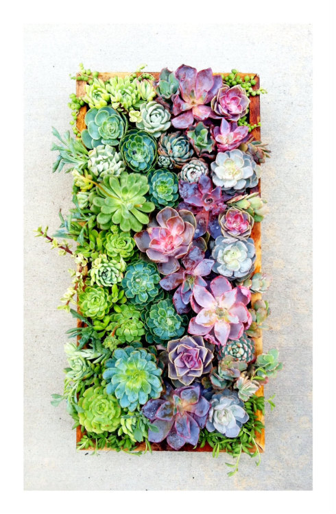 betterthanbutter:  Planting something like this for my apartment in August.