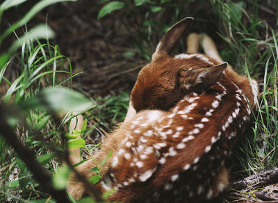itsalwaysswingseason:  animal, baby, cute, deer, forest - inspiring picture on Favim.com on We Heart It. http://weheartit.com/entry/29152767