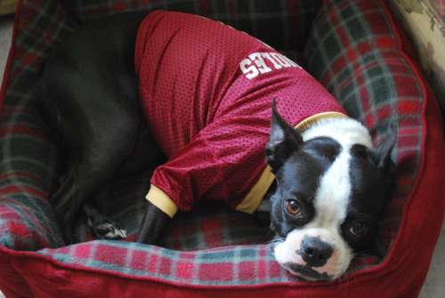 Cuchita wearing her Florida State University jersey. :D