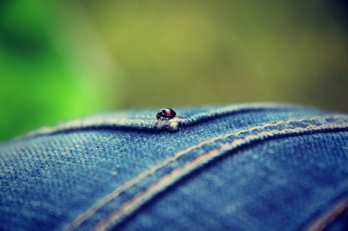 ohanaflowers:  Ladybug on my ass. ( foto di A. )