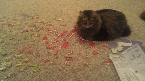 Can't you see I'm trying to do a puzzle?