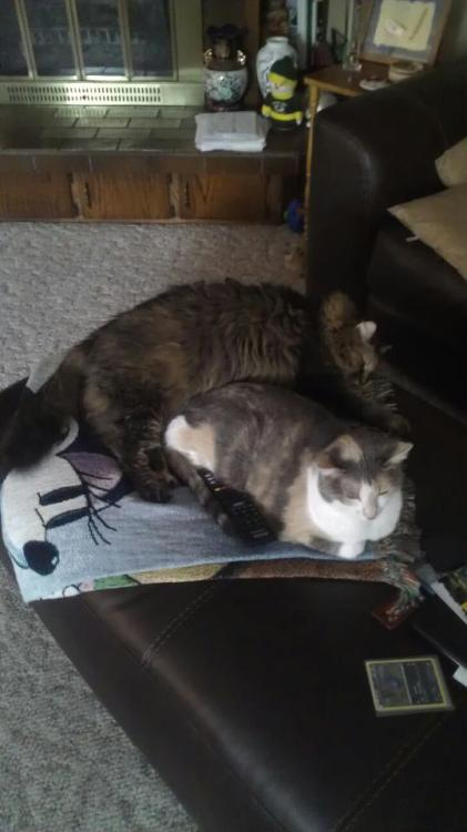 Fat cat snuggling with not-so-fat cat. :)
