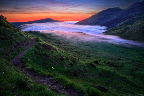 """Wilderness' Magic"" by Florent Courty"