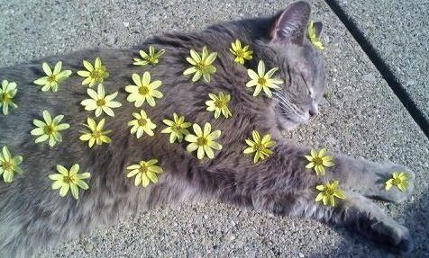 unimpressedcats:  Kitty loves da flowers