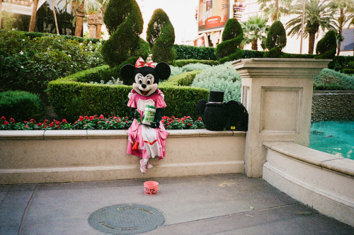 Now that Disney's not airing cartoons, Minnie is left to find other means of money. Yashica T4 + Kodak Max 400