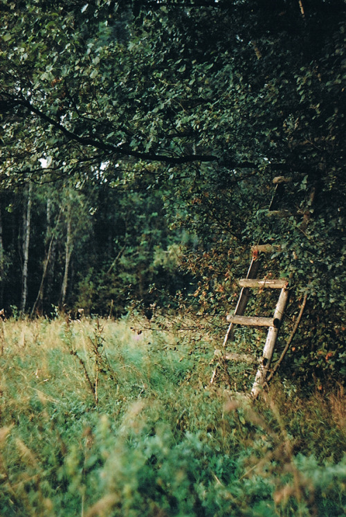 mykindafairytalee:  Ladder - very well hidden - by ~SuchVeryGoodDropper