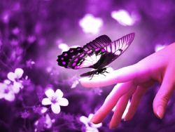Purple butterfly. Photo blog, I follow back :)