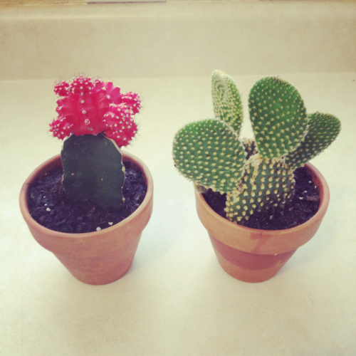 cacti children for our home!