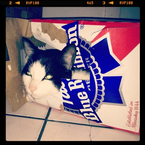 alabamarkansas:  Hipster Kitty. #citykitty (Taken with Instagram at 12Animal)