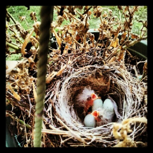 Baby birds :) (Taken with instagram)