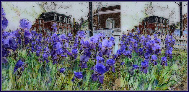 Urban Irises by Tim Noonan on Flickr.