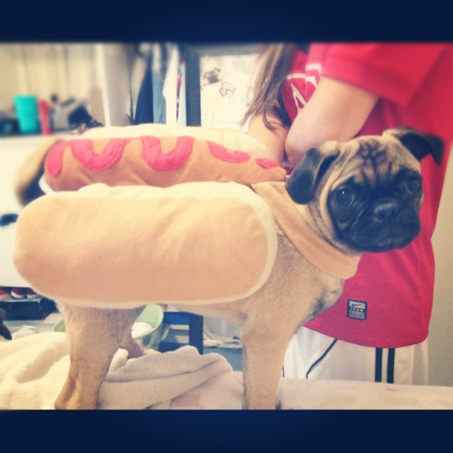 What can we say? Pug girl is a hot dog! (submitted by acid-washed-thoughts!)