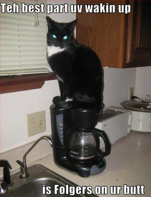 On teh coffee pot.