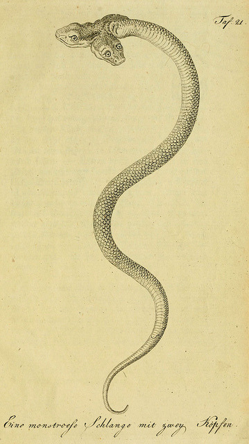 scientificillustration:  herrndelacepedes05lac_0249 by The Ernst Mayr Library on Flickr. Herrn de la Cepede's Naturgeschichte der Amphibien, oder der enerlegenden vierfussigen Thiere und der Schlangen : Eine Fortsetzung von Buffon's Naturgeschichte / Aus dem französischen übersetzt … von Johann Matthäus Bechstein. Bd. 1-5. Weimar: Verlage des Industrie = Comptoir's, 1800-1802. www.biodiversitylibrary.org/bibliography/5009