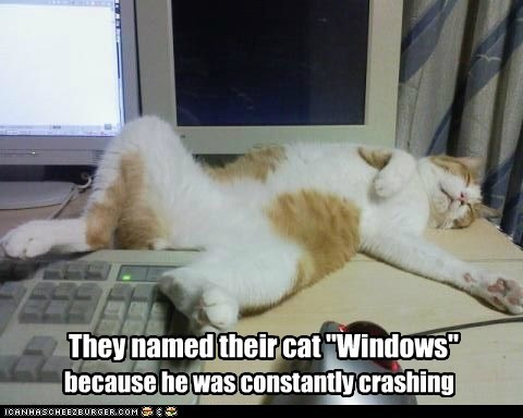 "They names their cat ""Windows"" (via Cheezburger)"