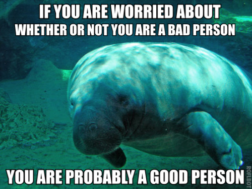 If you're not already following the calming manatee blog, do so now. I'm sure everyone could do with even more positivity on their dashboards! :)