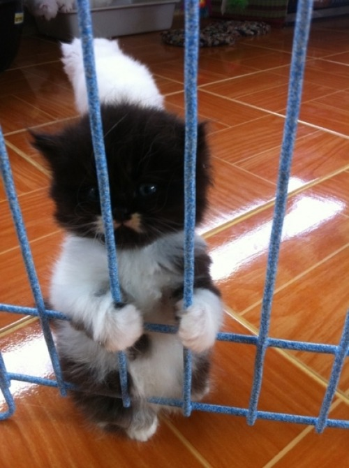 amnemonic:  Locked Up | Cutest Paw  I w-what?  OH MY GOD MY HEART