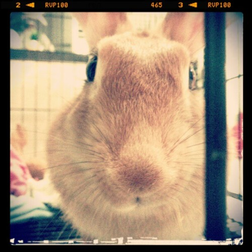 When fluffy meet S3 #rabbit #bunnystagram #rabbitagram #cute #animal #closeup #nature  (Taken with instagram)