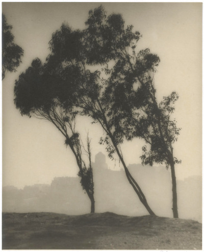 William E. Dassonville, Eucalyptus Trees and San Francisco Skyline, 1920s