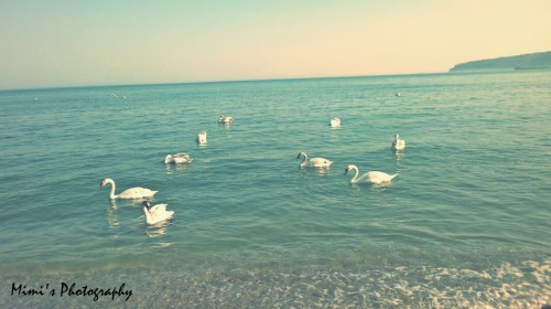 by: Milena Valchanova ~~ Mimi's Photography