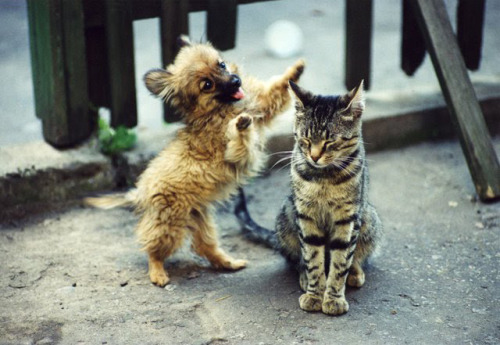 nzafro:  Go Away.  -hey cat, gimme a hug!! -don't you dare
