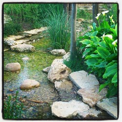 Stream's magic / la magia del arroyo / #water #stream #green #nature #river #flow #levees #plant #plants #rock #instagram #igers   (Tomada con instagram)