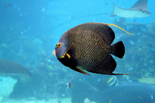 theanimalblog:  Fish (by Mark Snelson)
