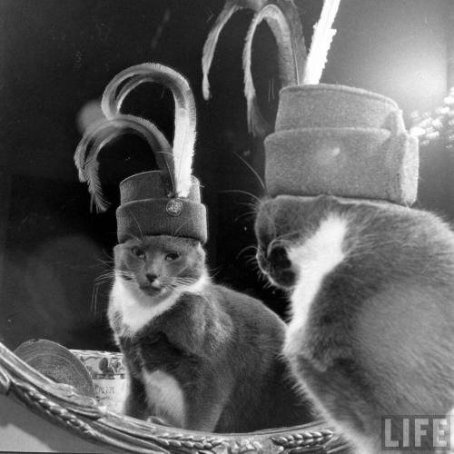 oldtimeycats:  James Whitmore: Monkey, The Cat & His Hats; January 1949. Source: LIFE Photo Archive, hosted by Google.