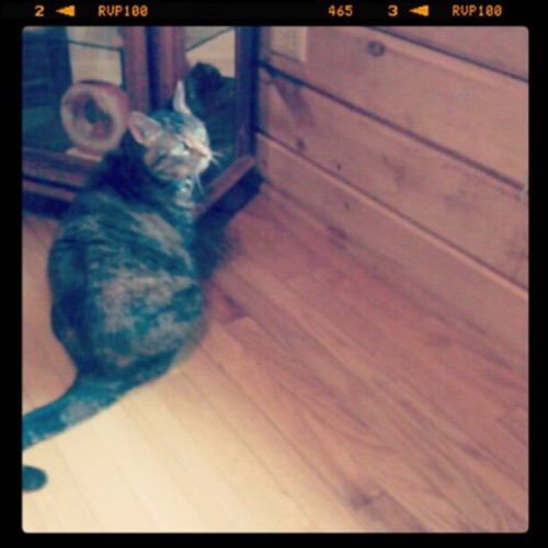 #cat #cocoa #logcabin (Taken with instagram)