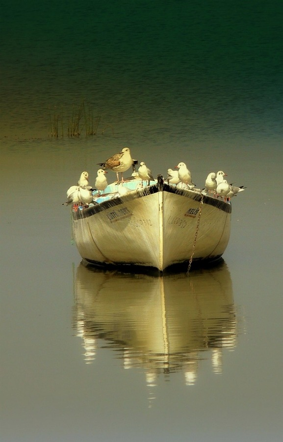 "magicalnaturetour:   Photo ""captain and crew"" by BLUE OLRİC :)"
