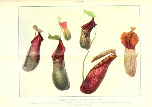 Le Jardin (1903): Nepenthes (pitcher plants, carnivores).