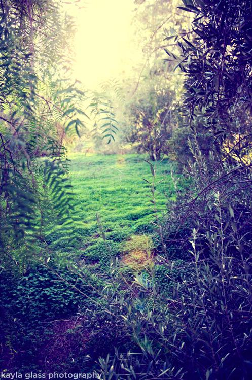 secret garden, santiago oaks regional park | orange, cadecember 30, 2011
