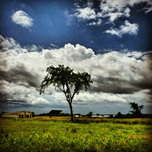 #sky #clouds #tree #barn #solarpannel #field #grass (Taken with instagram)