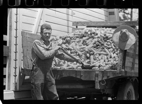 This is one of the other Library of Congress corn-related images I considered using for my previous post on grilled corn. It was published in May 1938, the photographer is Arthur Rothstein. More info here. If you haven't spent any time in the Library of Congress online archive you are missing out. It brings me a lot of joy.