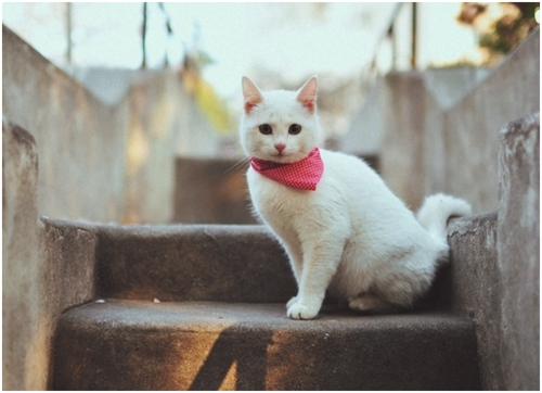 robynchell:  A cat with a scarf is all the Internet is really about, no? You love it.