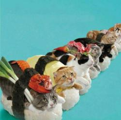 Sushi cats. Of course.